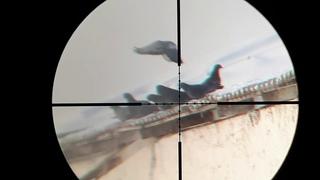 Крал панчер макси 4.5 охота на голубей минус 20 мороз