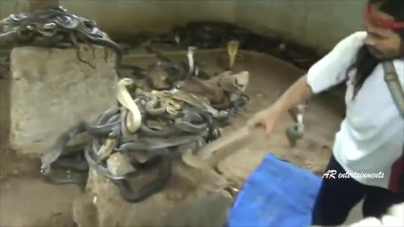 Мужик со стальными яйцами воспитание кобр