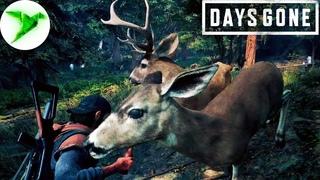 Days Gone на PC #11 🎮 Очень мясная серия