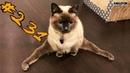 КОТЫ 2019 Смешные коты приколы про котов до слез – Смешные кошки 2019 – Funny Cats