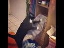 Кот сбрасывает все что ему мешает лечь