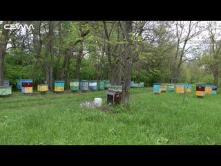 Очередная массовая гибель пчел в Курской области