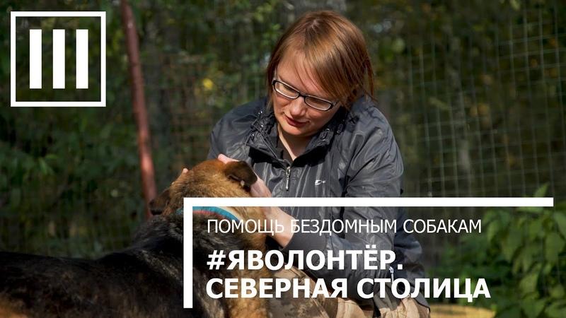 ЯВОЛОНТЕР СЕВЕРНАЯ СТОЛИЦА Помощь бездомным собакам