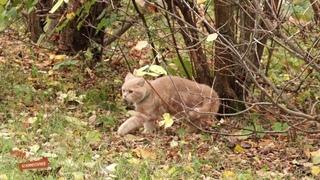 Любопытный котенок на прогулке