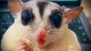 Лучшие смешные видео про животных/Приколы с животными/