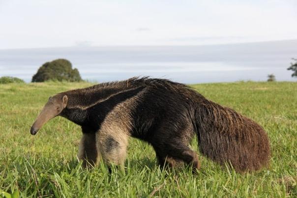 giant animals north america - 1000×667