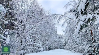 Релакс Снежная Дорога в Зимнем Лесу для Расслабления Медитации для Снятия Стресса Глубокого Сна