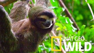 Дикая Латинская Америка Амазонка Один лес, много миров