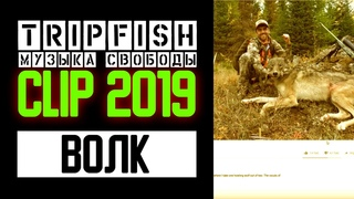 TripFish - CLIP - Волк 2019