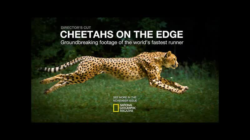 Cheetahs on the Edge Director's Cut National Geographic