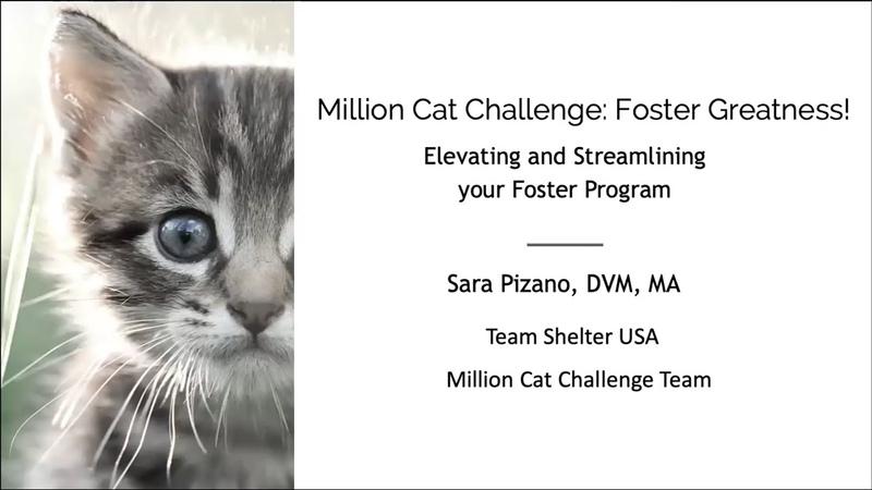 Рационализация процесса пристройства животных Foster Greatness Elevating and Streamlining Your Foster Program
