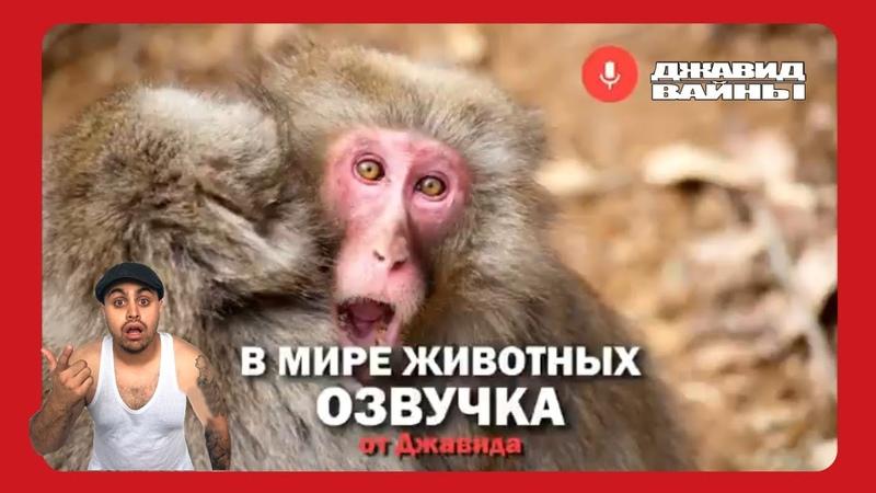Джавид В Мире Животных 2