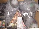 18.02. и 21.02.2020 года, были выпущены 5 здоровых голубей от вертячки и 2 голубя у которых были пов