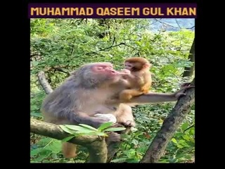 The baby loves the mother || بچہ ماں کو پیار کرتے ہوئے