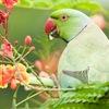 Все о мире попугаев