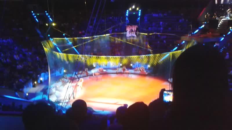 Это большой Московский Цирк дресировщики