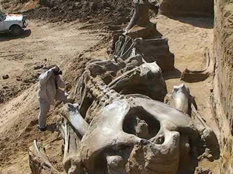 Skelet mamuta