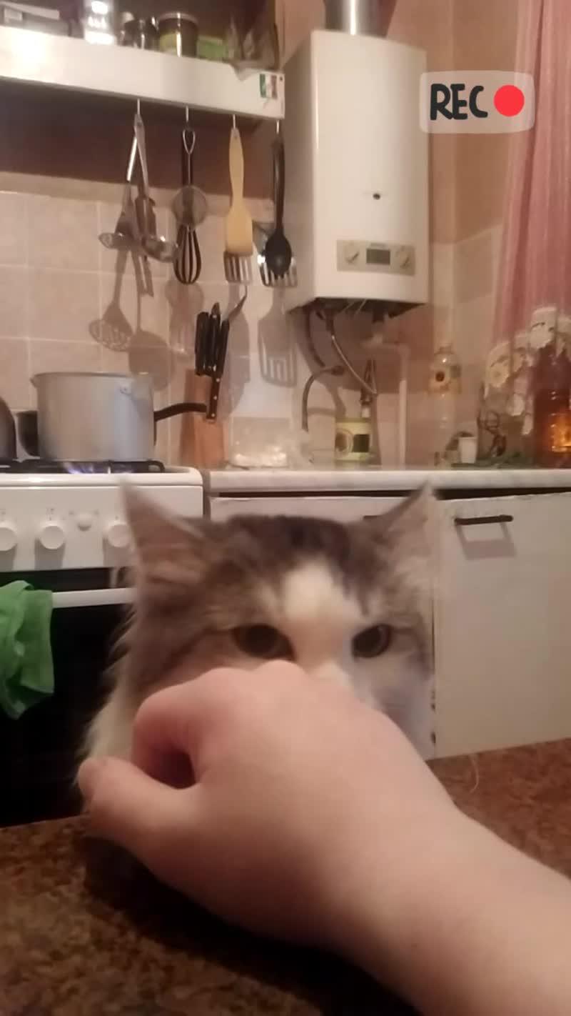 Постригли ли кота в итоге? И почему