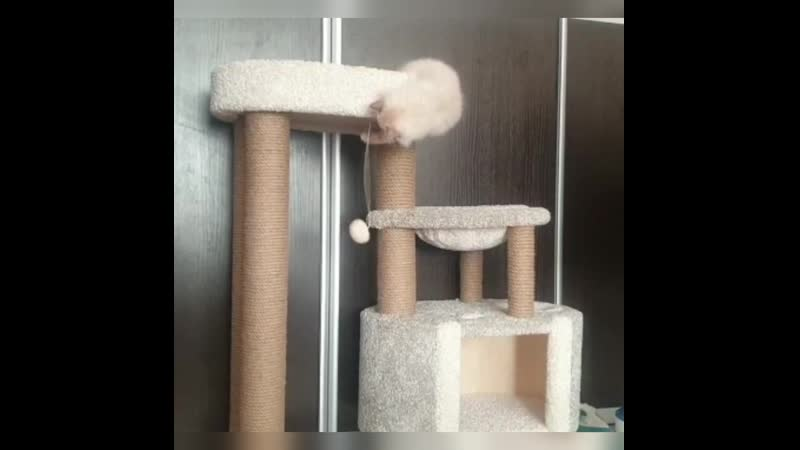 Котенок в Липецке
