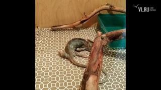 - Владелец экзотического зоопарка привёз на выставку в Артём больных животных