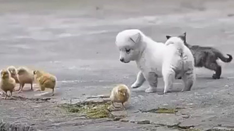 Cutest Puppies And Baby Animals Baby Cats Baby Animals Funny Pet Animals Life Puppies TV