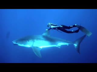 GoPro_ Ocean Ramsey and a Great White Shark/Hawaii diver