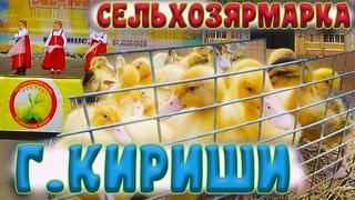 Сельскохозяйственная ярмарка в городе Кириши