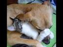 🙀Попался лохматый! 🐈 Подборка смешных котов и котят для хорошего настроения! 😸