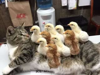 Смешные коты | Подборка за неделю #17