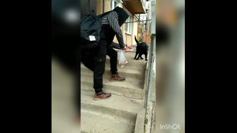 [ПилиД] Тоша и его кошачье семейство обедают