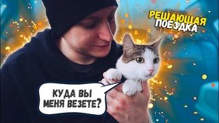 Спасение котика с раной на шее. Решающая поездка / SANI vlog