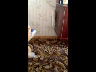 Самый злой кот в мире лёвчик ржач