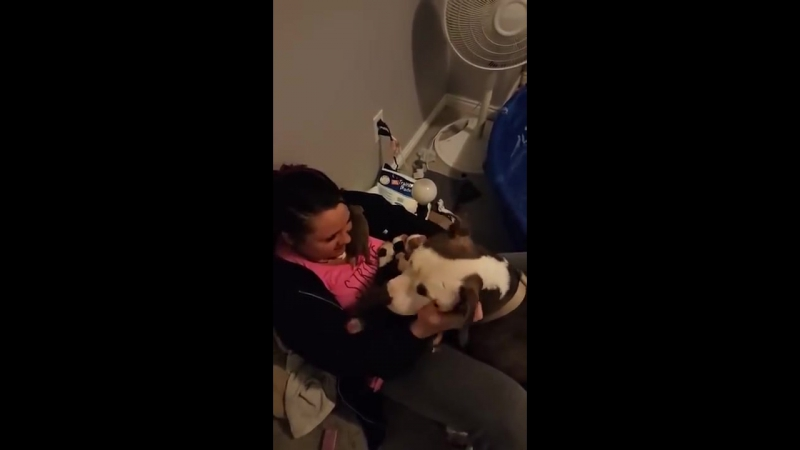 Pitbull Gives Birth to 11 Puppies Gently Places them in Foster Moms Lap
