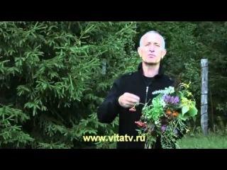 Доктор Попов - Польза Трав