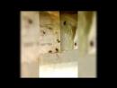 УЖАС!! кухня внутри Кафе мандарин style Пермь, Пионерская 3