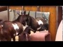 Эти забавные животные! Подборка смешных видео с животными