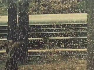 """""""Голубое и зеленое""""  реж. Виктор Гресь по рассказу Юрия Казакова.  1970 год."""