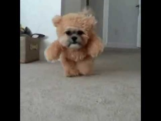 Munchkin the Shih Tzu Teddy Bear ORIGINAL