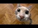 Приколы с животными собаки и кошки видео прикольно