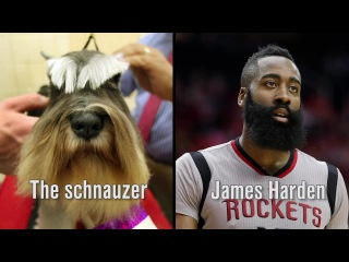 What if dogs were NBA All-Stars