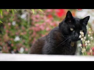 BBC. Кошачьи тайны / Cat Watch 2014: The New Horizon Experiment, 2 серия из 3