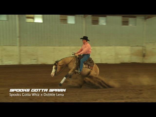 Spooks Gotta Spark 2013 Buckskin Stallion Spooks Gotta Whiz x Dolittle Lena NRHA and NRBC