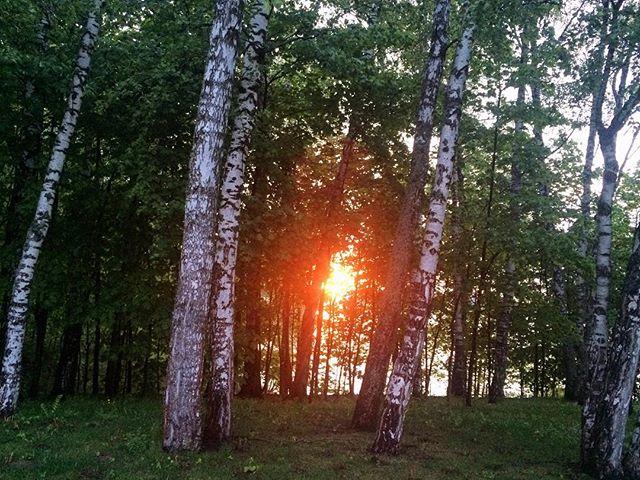 Александр Хоменко: Вот она - русская природа без фильтров и прикрас. Я люблю пальмы и все такое... но когда вижу подобные пейзажи, мне хочется подпевать Расторгуеву про коня. 🇷🇺🌅 #россия #безфильтров #природа #закат #лес #russia #nofilter #sunset #forest #nature