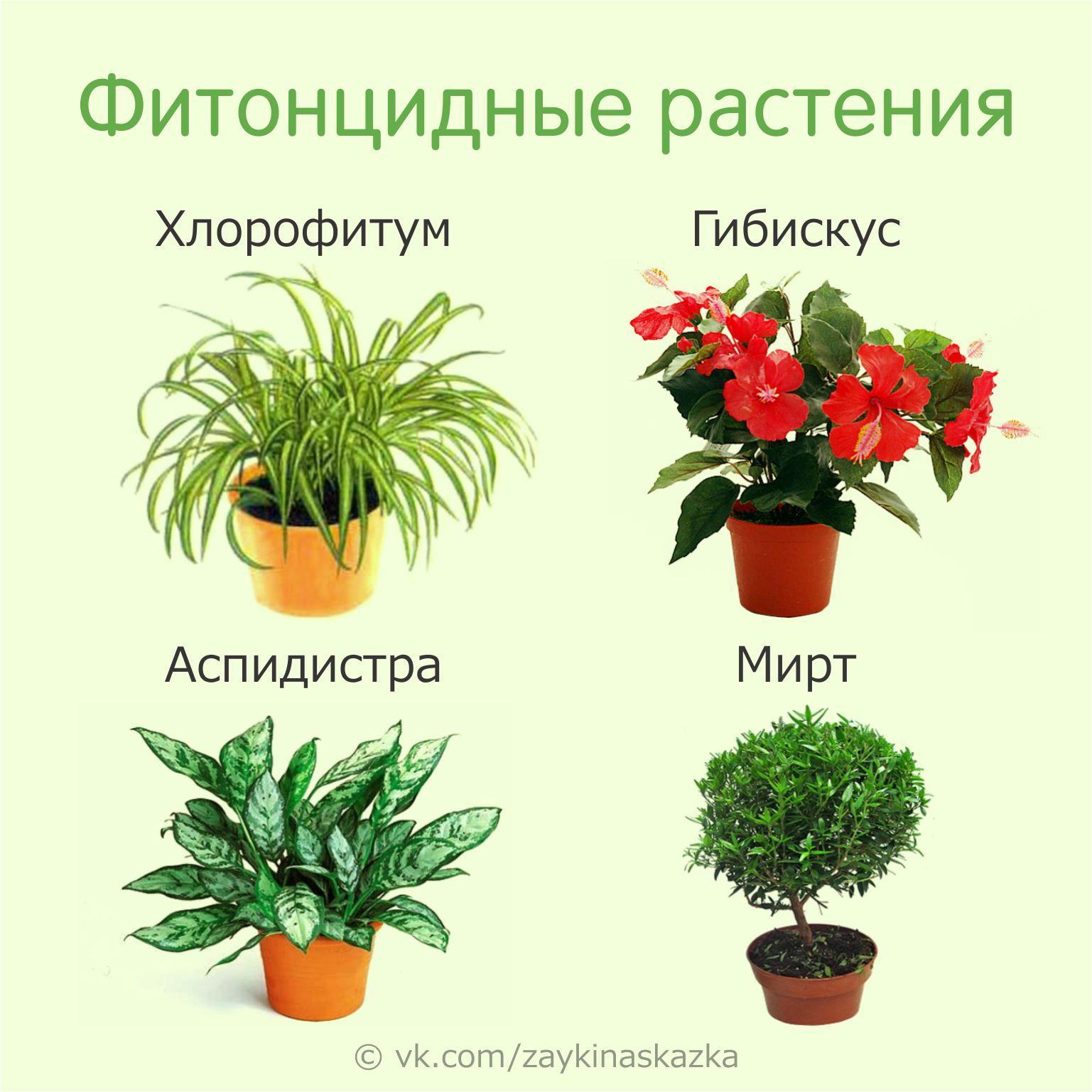 Картинки комнатные цветы с названиями для детей