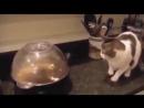 Смішні відео про котів-save4