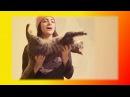 Смешное видео про кошек котят Прикольные смешные кошки Создай себе хорошее наст