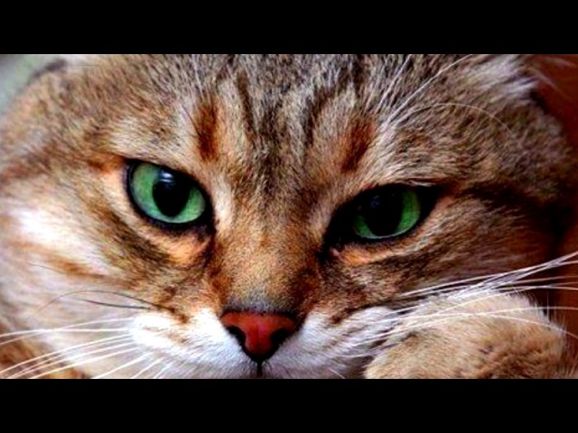 5 МУТАНТОВ С СУПЕРСИЛОЙ СНЯТЫХ НА КАМЕРУ Черный кот