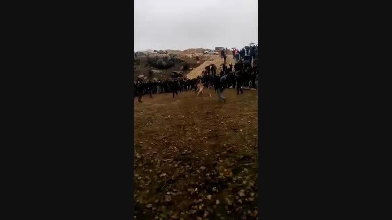 Besni'den Tatar VS Adıyaman Gölbaşı'dan Ejder ( Besni Festivali)