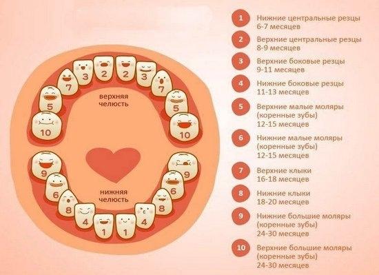 Порядок прорезывания зубов у детей этом что-то