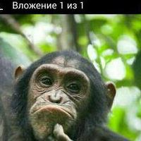 МаксимБогданов